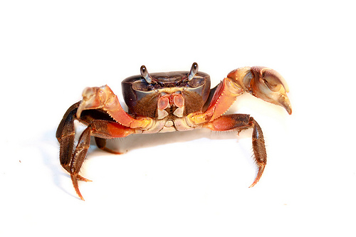 FlickrCrab