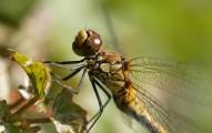 FlickrDragonfly