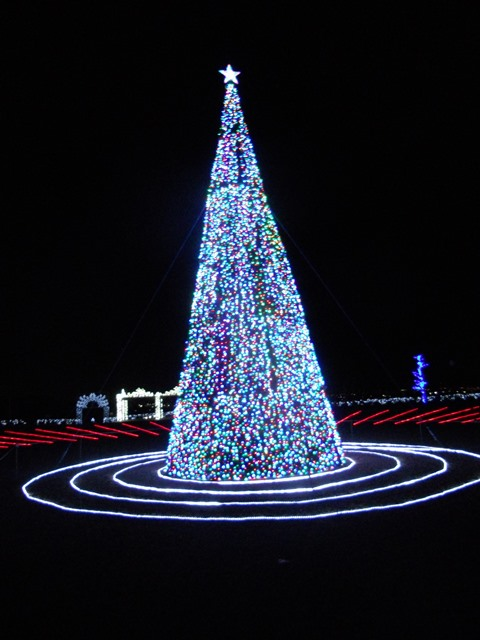 Illumination Tree, Japan