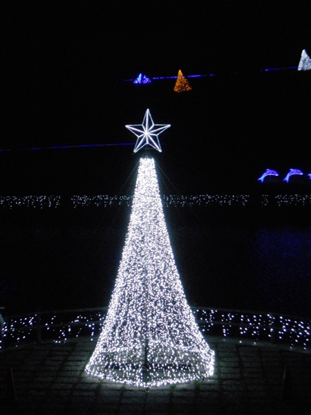 Light Tree in Front of Lake