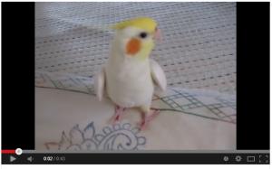 Fukuchan sings Totoro song