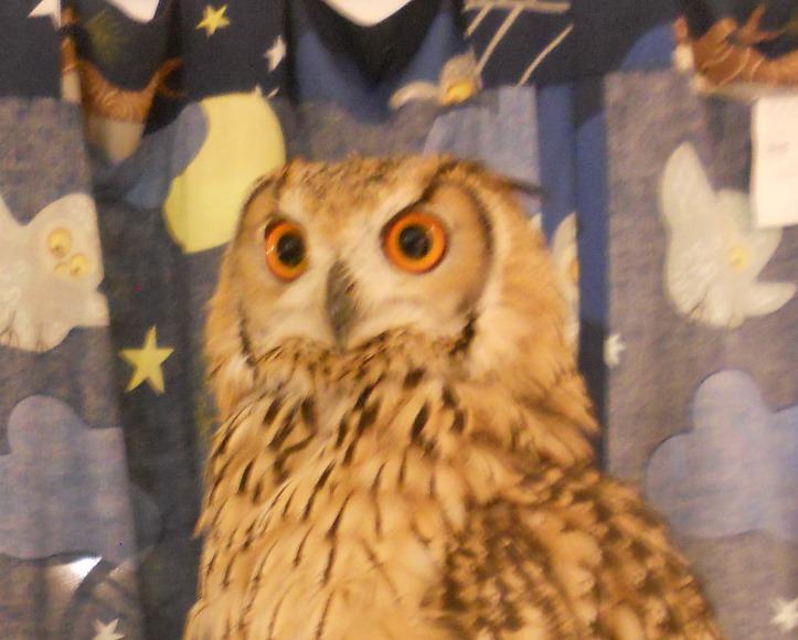 Tokyo Owl Cafe Horned Owl