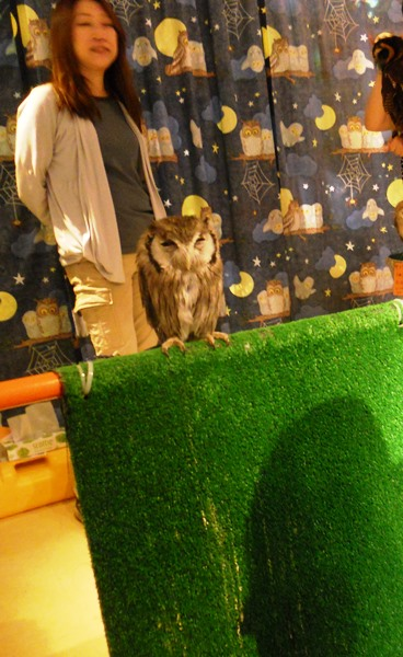 Owl Cafe tiny owl