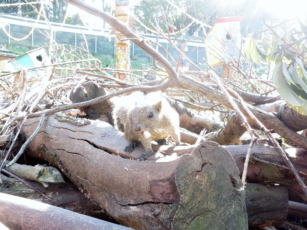 Machida Squirrel Garden Squirrel