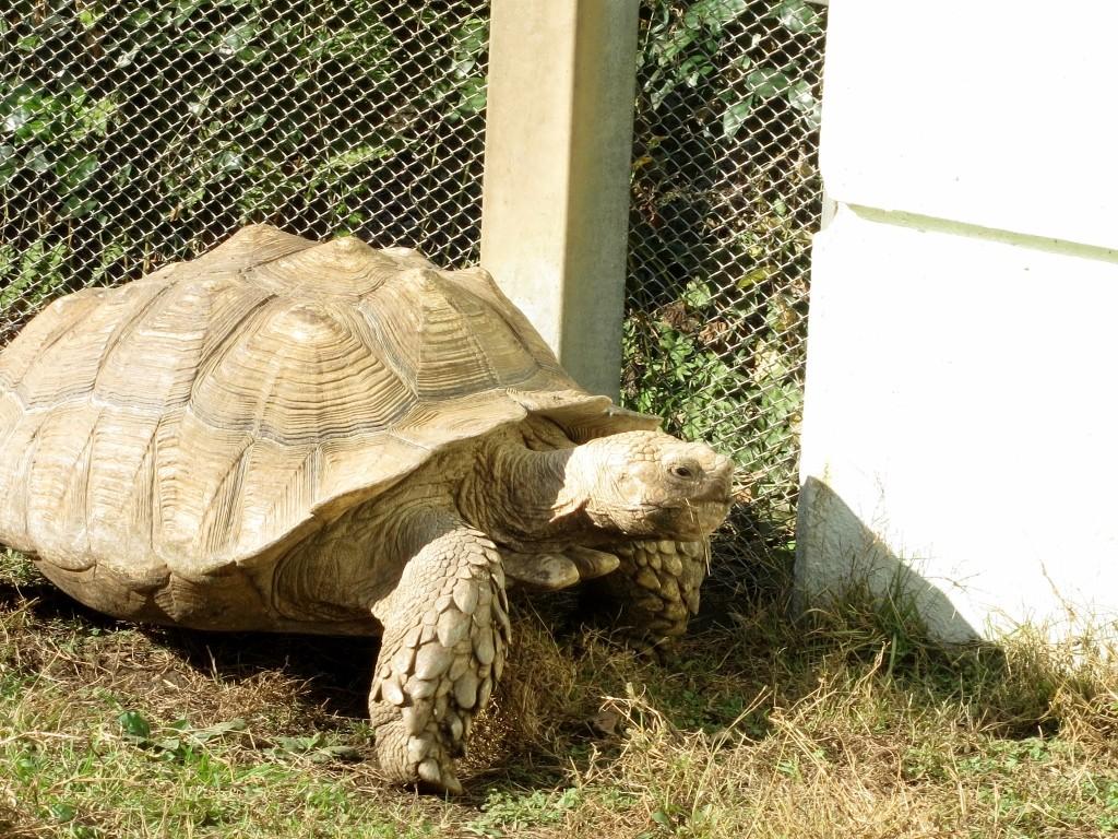 Tortoise at Machida Squirrel Park